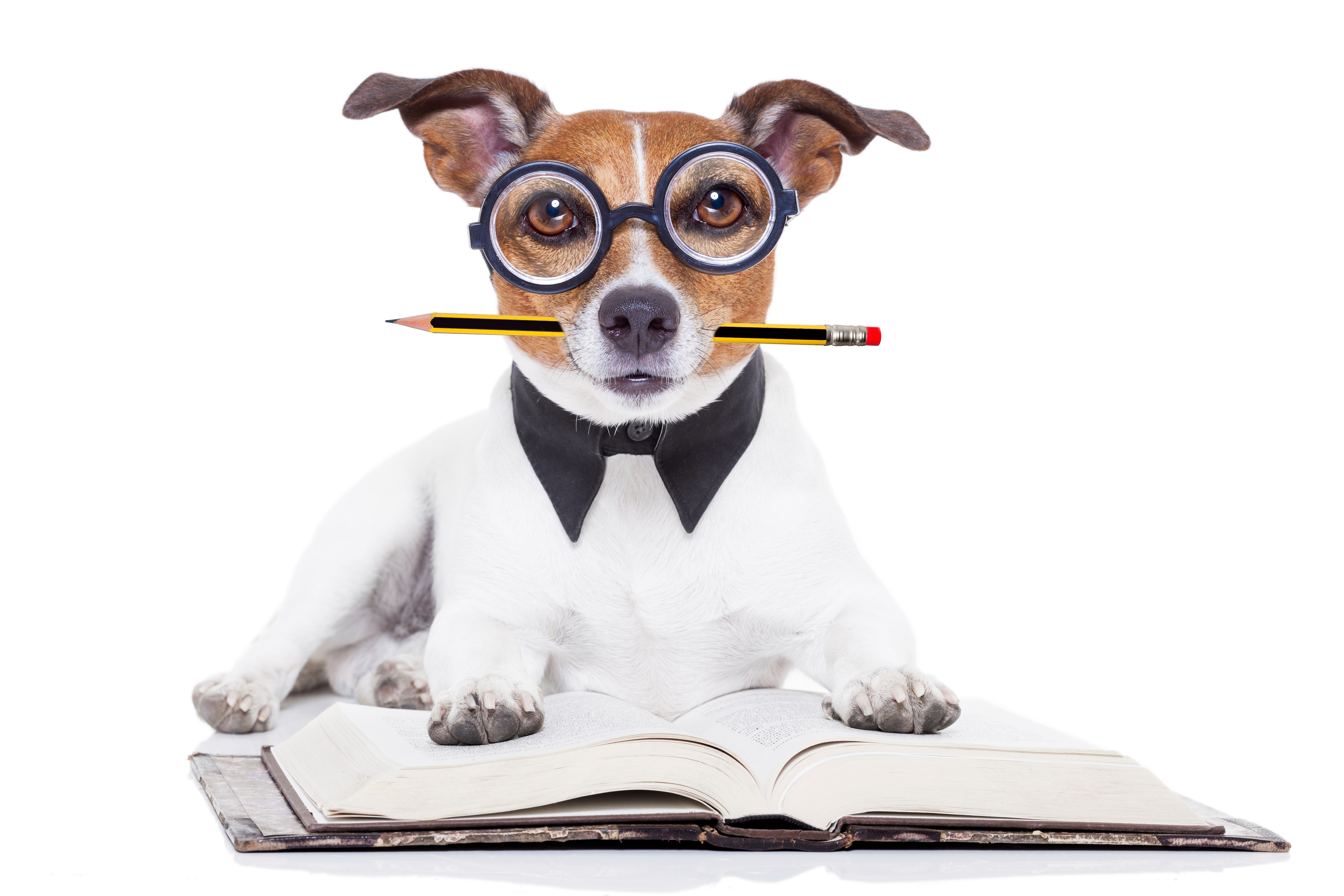 iStock_dog_with_pencil_and_paper